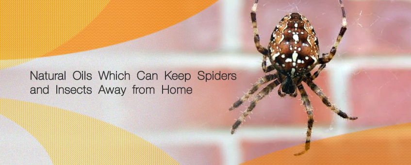 10 Natural Oils Which Can Keep Spiders and Insects Away from Home