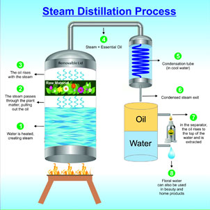 Steam Distillation Process